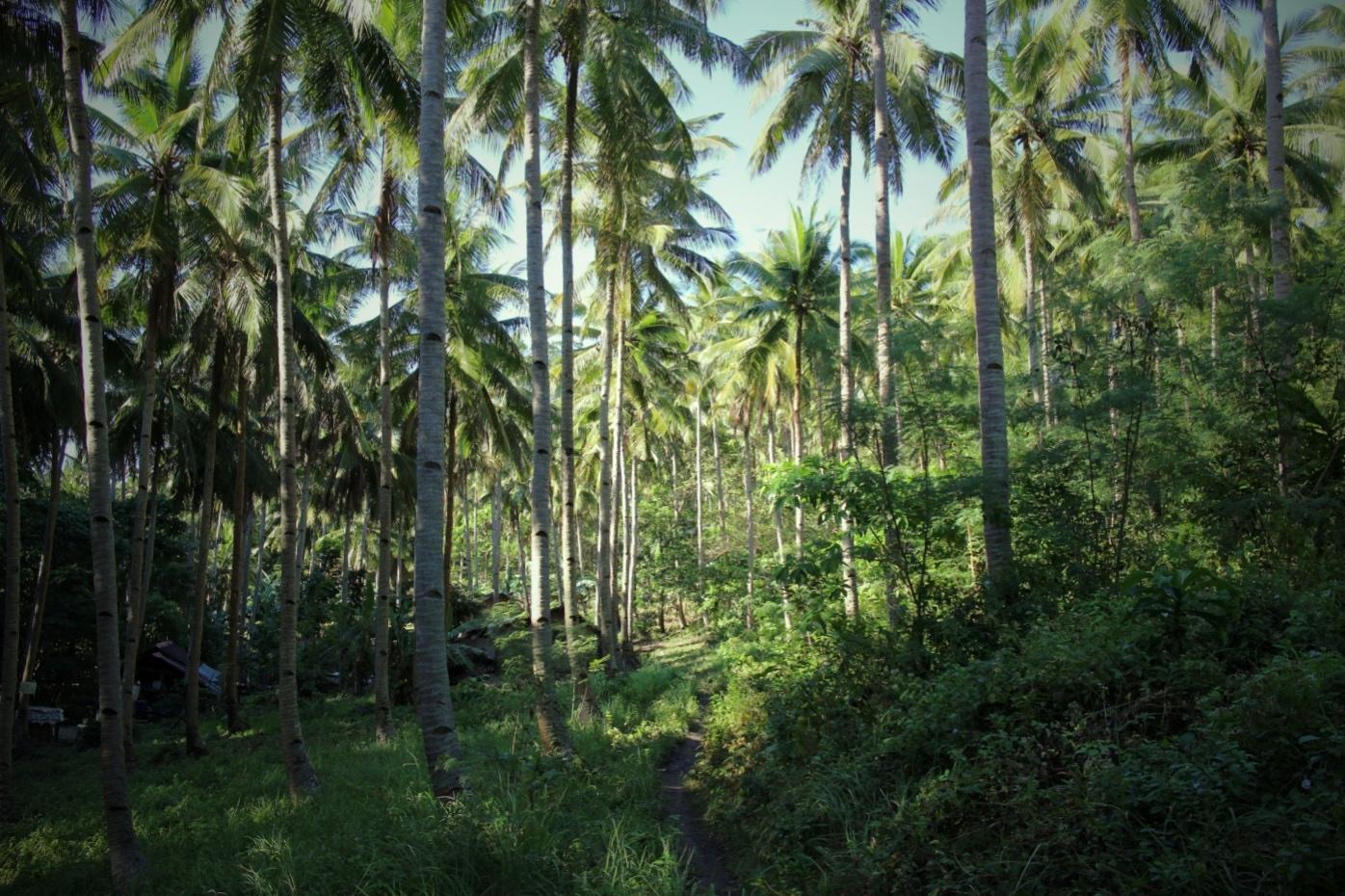 De Palmenkolonie